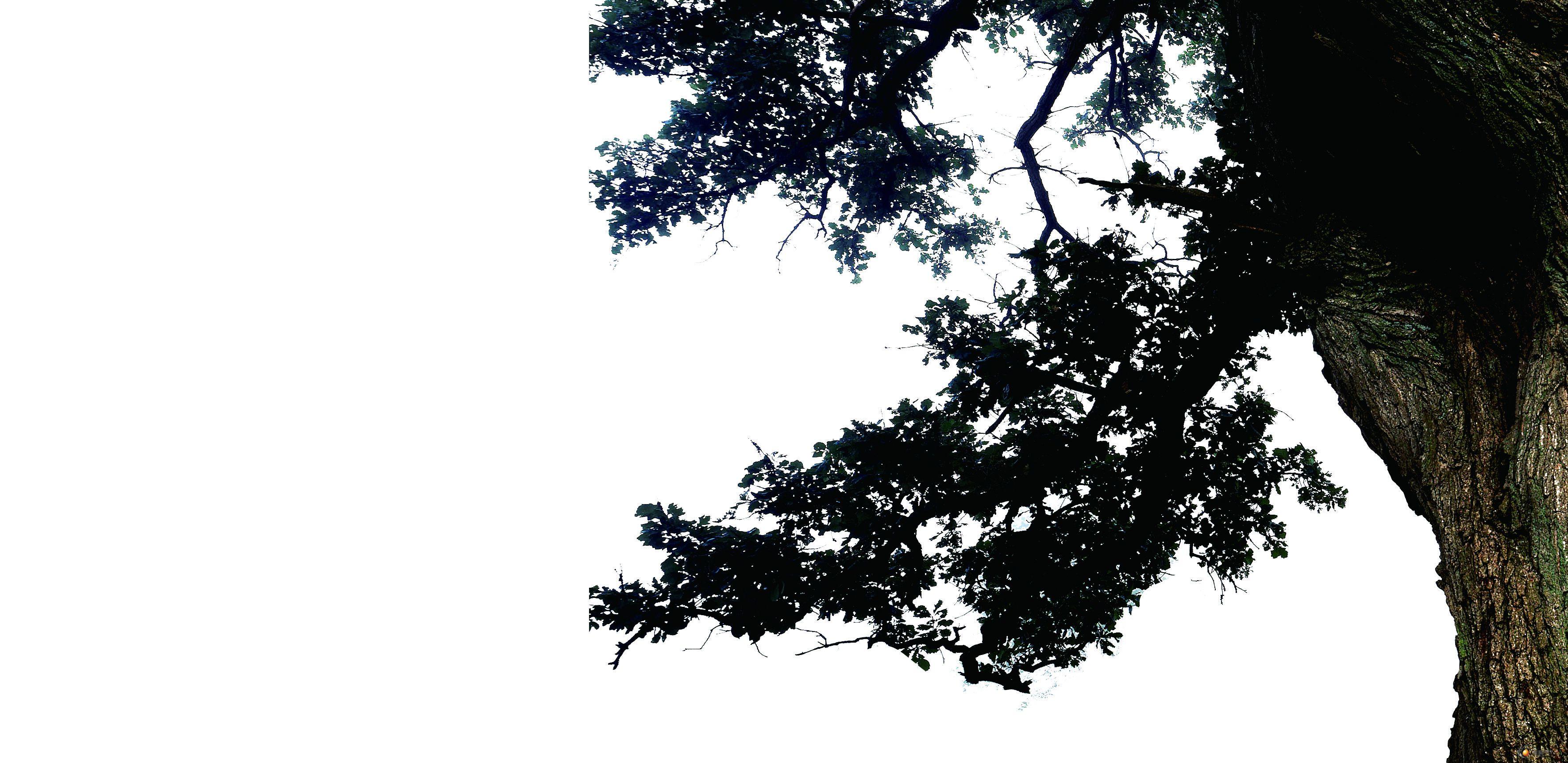 【江南柳】高清图片23张 - 图片素材 - 锐普ppt论坛