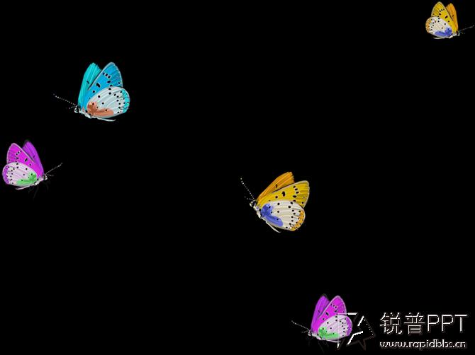 【海螺 花草 蝴蝶 银杏叶】等png免抠图素材(22p)