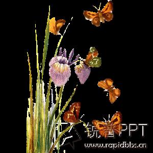 莲花免抠图素材展示