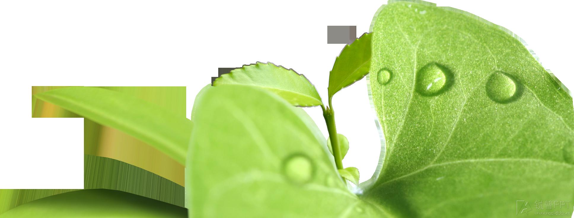 〖水大师素材分享〗绿色的图片(png格式3张)