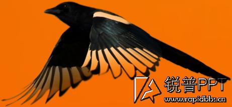 〖水大师素材分享〗虫鸟(14张png透明背景图片)